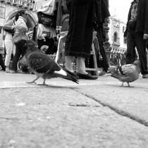 àpattesd'oiseaux